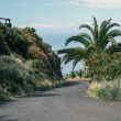 La Palma 2013 - Mountain Road — Stock Photo