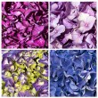 Hydrangecollage textures — Stock Photo #14712377