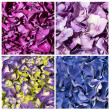 Stock Photo: Hydrangecollage textures