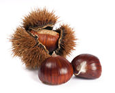 Chestnuts and curly — Stock Photo