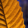 Autumn leaf macro — Stock Photo #37462263