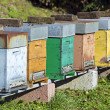 Honey bee hives — Stock Photo #39401959