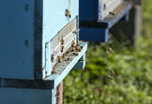 Honey bee hives — Stock Photo