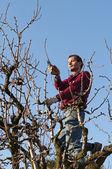 Człowiek drzewo przycinanie — Zdjęcie stockowe