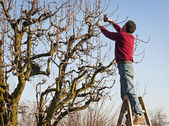 Man pruning tree — Stock Photo