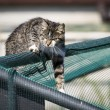 Hunting cat — Stock Photo #41711825