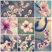 Vintage flowers collection — Stock fotografie