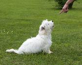 Cão obediente — Foto Stock
