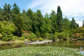 Paisagem do jardim japonês com lagoa — Foto Stock