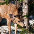 Little deer in snow forest — Stock Photo #22583801