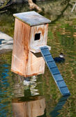 Duck nest wood box on the pond — Stock Photo