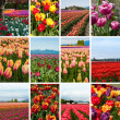 Tulip collage of twelve photos — Stock Photo #27048175