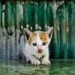 Stock Photo: Little Kitty