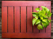 Devil's Ivy in pot ,on wooden table — Foto Stock