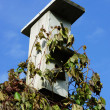 Sparrow sitting on the roof of the birdhouse. — Stock Photo #34393239