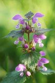 ピンクの花の花の一部. — ストック写真