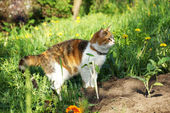 Cat hunts in the garden. — Stock Photo