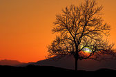 Tree at sunrise — Stock Photo