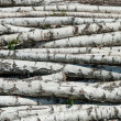 Stock Photo: Fresh cutted birch logs.