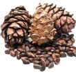 Stock Photo: Pine cones and nuts.