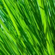 Abstract fresh grass background. — ストック写真