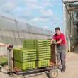 Stock Video: Work in Commercial Greenhouse
