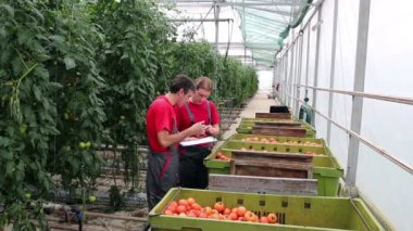 Greenhouse Management — Stock Video