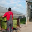 Vídeo de stock: Two Greenhouse Workers
