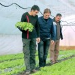 Stock Video: Family Business - Greenhouse Owners