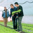 Stock Video: Three Farmers in Greenhouse