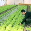Stock Video: Two Young Engineers in Greenhouse