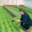 Young Farmer in Greenhouse — Stock Video