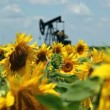 Oil Field Pump Jack In Sunflowers — Stock Video #21265969