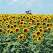 Stock Video: Dancing Sunflowers