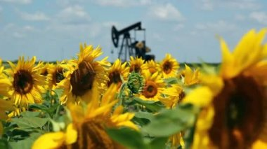 Oil Field Pump Jack In Sunflowers — Stock Video