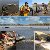 Commercial Fishing - Collage — Stockfoto