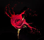 Red rose splashes — Stock Photo