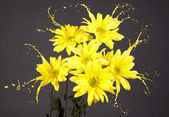 Daisies with splashes — Stock Photo