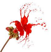 Red flower splashes — Stock Photo