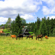 Herd of horses and cow grazing on an autumn meadow — Стоковая фотография
