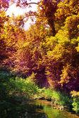 在秋天时的美丽溪的视图. — 图库照片