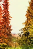 Paysage d'automne avec forêt colorée — Photo