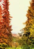 Podzimní krajina s barevný les — Stock fotografie
