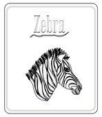 Zebra. Hand drawn sketch illustration isolated on white backgro — Stock Vector