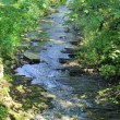 Forest brook running over mossy rocks — Stock Photo