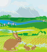 Bunnies in green meadow — Stock Vector