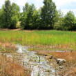 Stock Photo: Small stream between fields