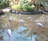 Group of pink flamingos standing in water — Stock Photo