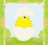 Şirin Paskalya tavuk yumurta kabuğu — Stok Vektör