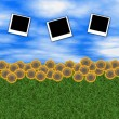 Sky and sunflowers with photo frames — Stock Photo
